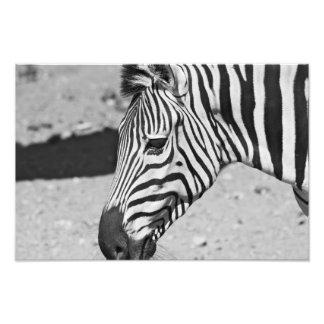 Zebra Close Up Print Photo Print