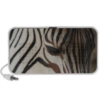 Zebra, close-up laptop speakers