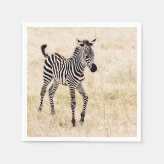 Zebra Colt Napkin