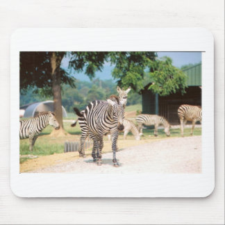 Zebra Convention Mouse Pad