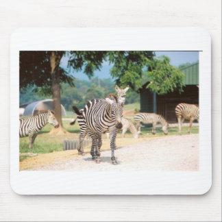 Zebra Convention Mouse Pad