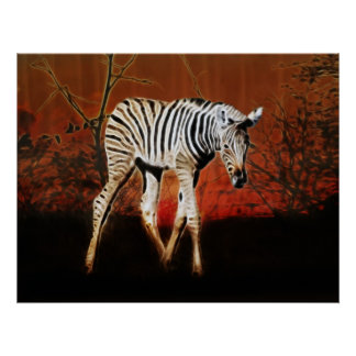 Zebra crossing series South Africa Poster