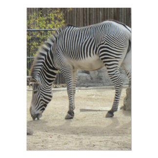 "Zebra Customizable Party Invitation 5.5"" X 7.5"" Invitation Card"