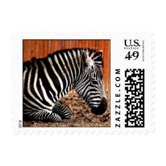 Zebra Darling - postage stamps