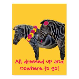 Zebra design with fun gerber daisies postcard
