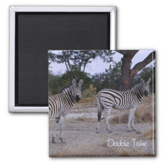 Zebra Double Take Photo Magnet