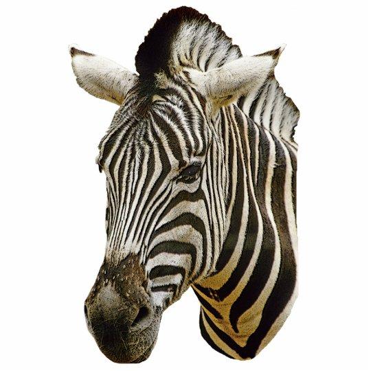 Zebra Drawing Photosculpture