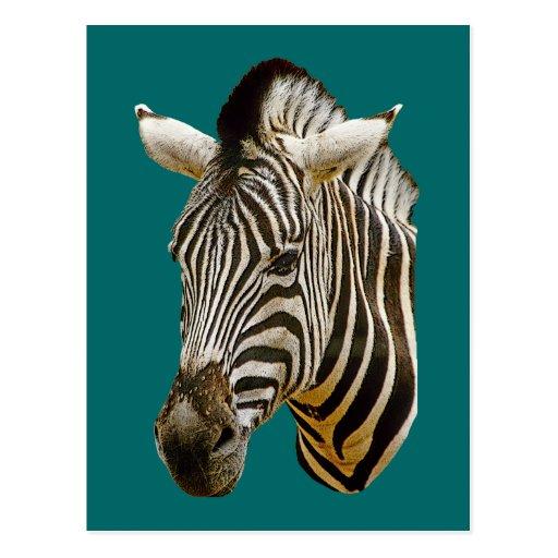 Zebra Drawing Postcards