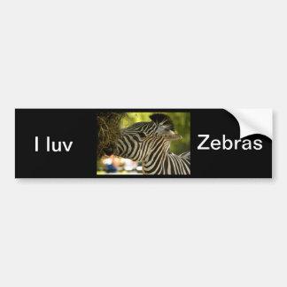 Zebra Eating Bumper Sticker Car Bumper Sticker