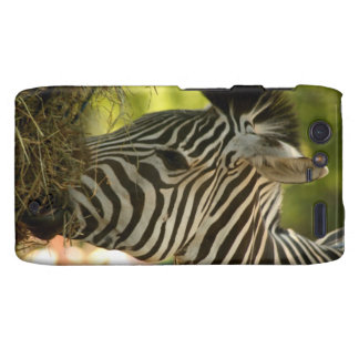 Zebra Eating Droid RAZR Case