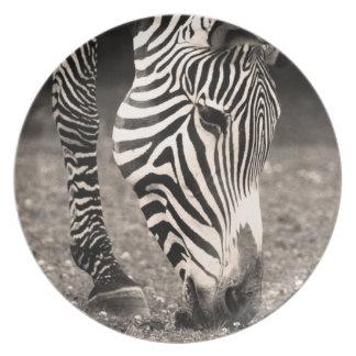 Zebra Eating Grass Melamine Plate