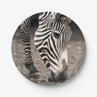 Zebra Eating Grass Paper Plate