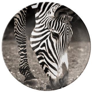 Zebra Eating Grass Porcelain Plate