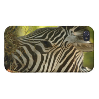 Zebra Eating IPhone 4 Case