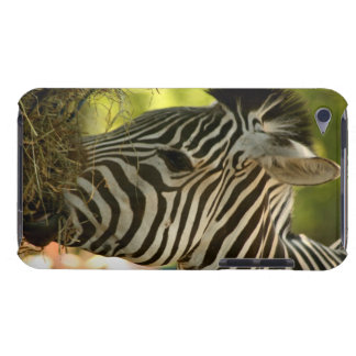 Zebra Eating IPod Speck Case Barely There iPod C iPod Touch Covers