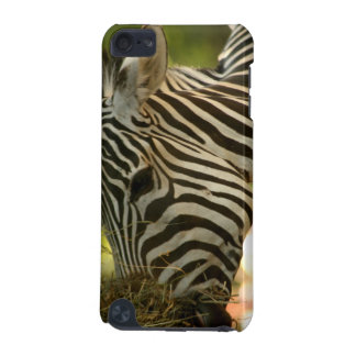 Zebra Eating iPod Touch 5G Covers