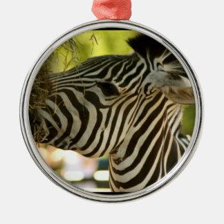 Zebra Eating Ornament