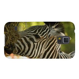 Zebra Eating Samsung Galaxy Nexus Case