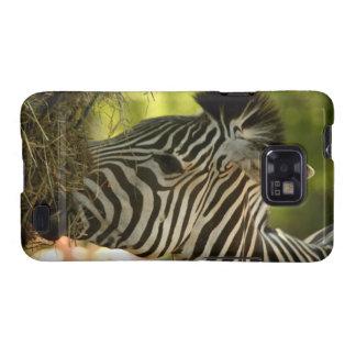 Zebra Eating Samsung Galaxy S2 Case