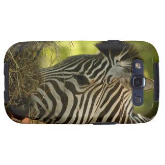 Zebra Eating Samsung Galaxy S3 Case