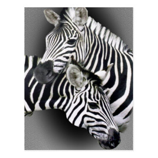 Zebra Entwined Gifts Postcard