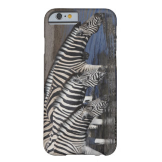 Zebra (equus quagga) drinking at a waterhole in barely there iPhone 6 case