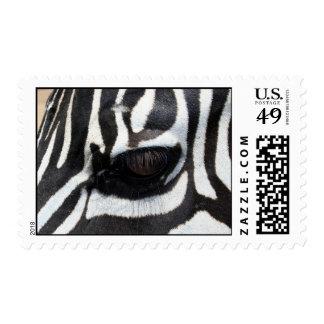 zebra eye 1 postage stamp