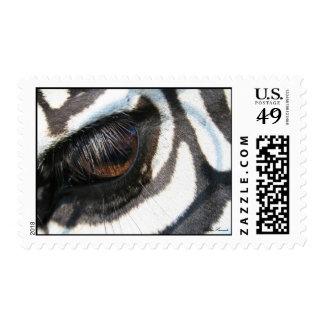 zebra eye 2, signed stamps