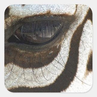 Zebra eye cute serene image square sticker