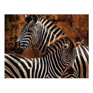 Zebra fall stripes postcard