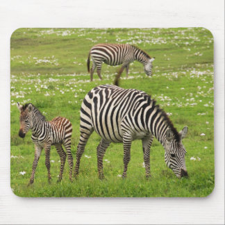Zebra family mouse pad