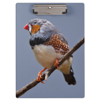Zebra Finch Clipboard