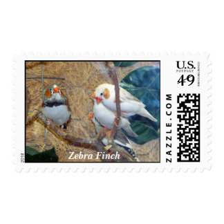 Zebra Finch Stamp