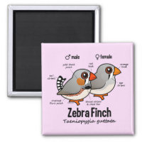 Zebra Finch Statistics Square Magnet