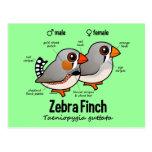 Cute Zebra Finch By Birdorable