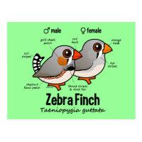 Zebra Finch Statistics Postcard