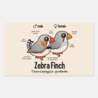 Zebra Finch Statistics Rectangle Sticker