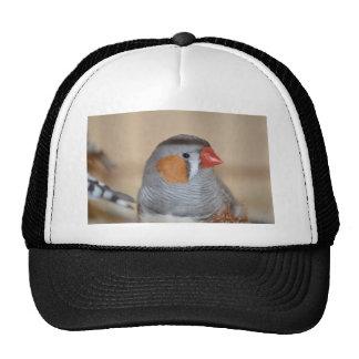 Zebra Finch Trucker Hat