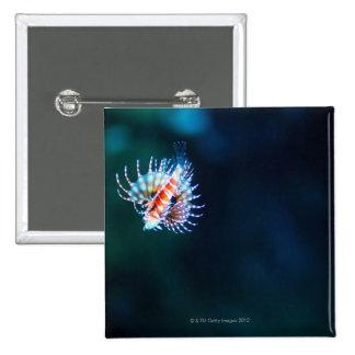 Zebra firefish pinback button