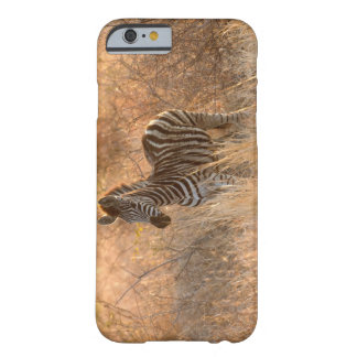 Zebra foal in morning light barely there iPhone 6 case