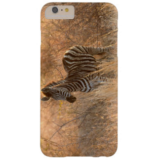Zebra foal in morning light barely there iPhone 6 plus case