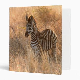 Zebra foal in morning light binder