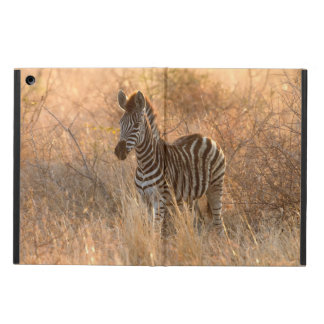 Zebra foal in morning light case for iPad air
