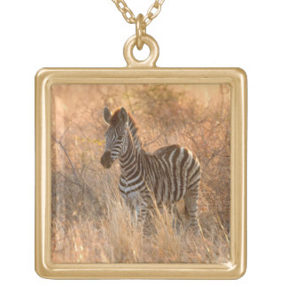 Zebra foal in morning light gold plated necklace
