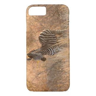 Zebra foal in morning light iPhone 7 case