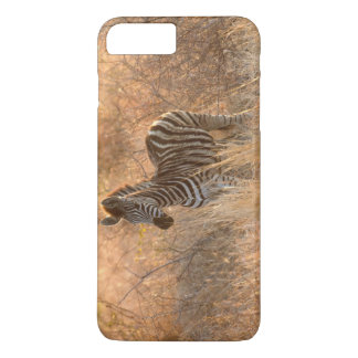 Zebra foal in morning light iPhone 8 plus/7 plus case