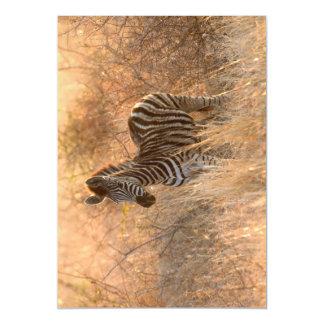 Zebra foal in morning light magnetic card
