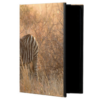 Zebra foal in morning light powis iPad air 2 case