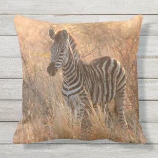 Zebra foal in morning light throw pillow