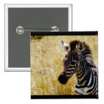 Zebra Foal wildlife baby Button